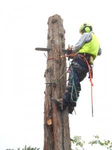 支障木、危険木の伐採