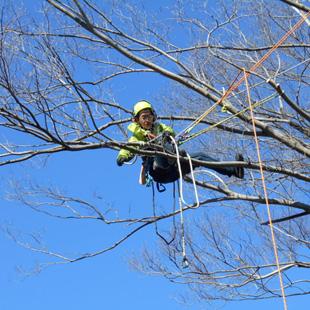 樹木管理のイメージ