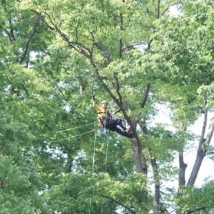 樹木診断のイメージ
