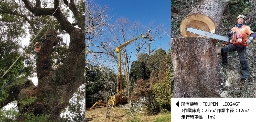 特殊な条件の樹木伐採